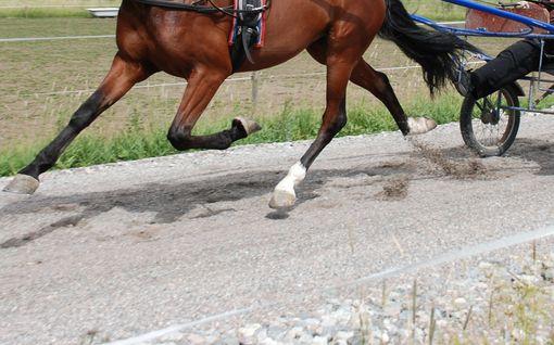 Ravihevonen törmäsi autoon valtatiellä - kuljettaja ja hevonen kuolivat onnettomuuspaikalle