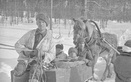 """Se oli talvisodan pieni ihme: """"Kuollut"""" sotahevonen tunnisti tutun paikan, repi itsensä irti ja löysi tiensä kotiin - """"Mikä yllätys, meidän Jalo!"""""""