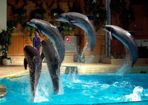 Delfiini-show vuonna 2003.