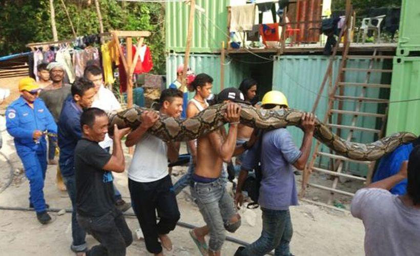 Maailman pisin pyydystetty käärme kuoli