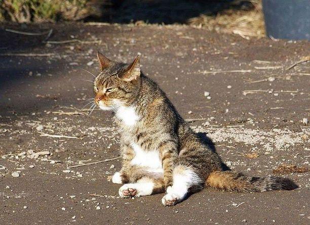"""Perheen """"uusi kissa"""" nauttii kissanpäivistä ja pyydystelee hiiriä pihamaalla."""