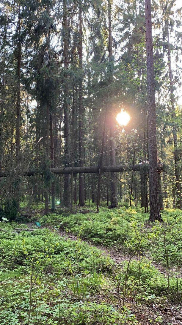 Seikkailupuistosta kerrotaan, että he ovat yrittäneet saada kaupunkia kaatamaan huonokuntoisia puita.