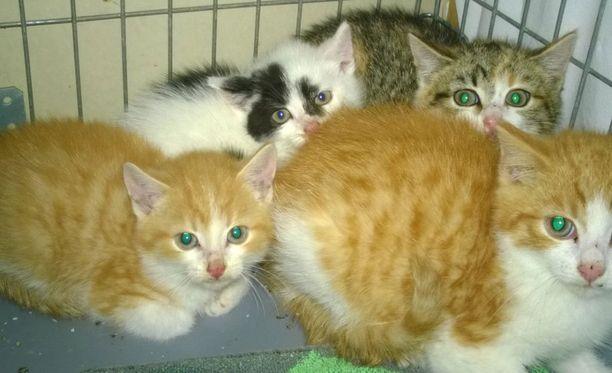 Mitä huonommalla hoidolla kissat ovat, sitä enemmän ne kylvävät tuhoa lähiympäristönsä villieläinten keskuudessa.
