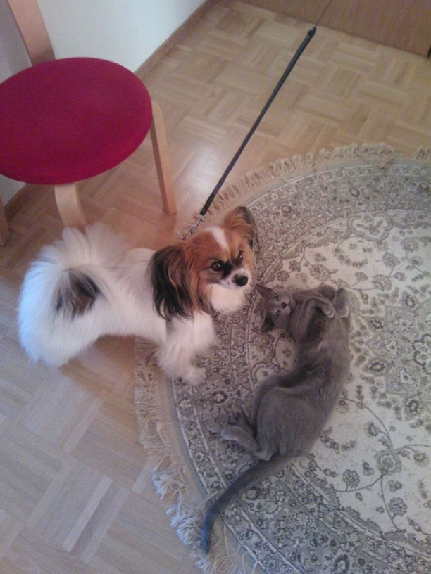 Reijon perheeseen tuli ensin koira ja sitten kissa.