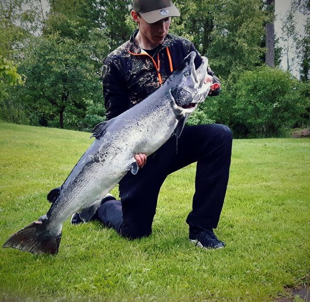 Kalle Kiviniemi kannattelee 120 senttiä ja 16 kiloa oululaista lohta.