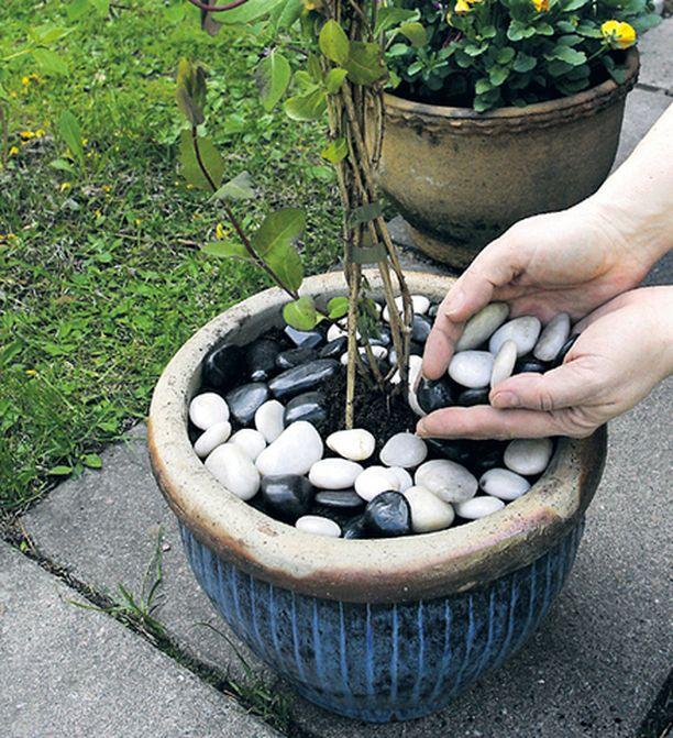 Älä istuta ruukkua liian täyteen. Laita sen sijaan kasvin juurelle koristekiviä, joilla saat alkukesäksi runsauden tuntua.