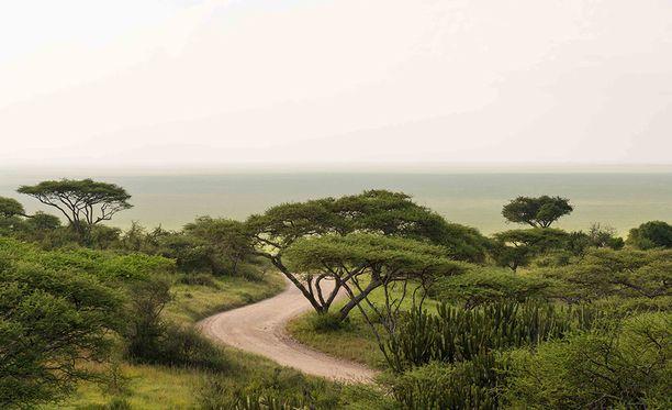 Sunnuntain safarikierrosta vetänyt yritys järjestää muutaman ihmisen safariajeluja Tansaniassa, Keniassa ja Ugandassa. Tämä kuva on Serengetin kansallispuistosta.