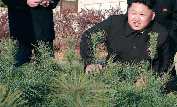 Kim kuvattiin tänä vuonna antamassa neuvoja puidenkasvatuslaitoksella. Puiden kasvun seuraaminen onkin lähes yhtä jännittävää kuin vaali-ilta Pohjois-Koreassa.
