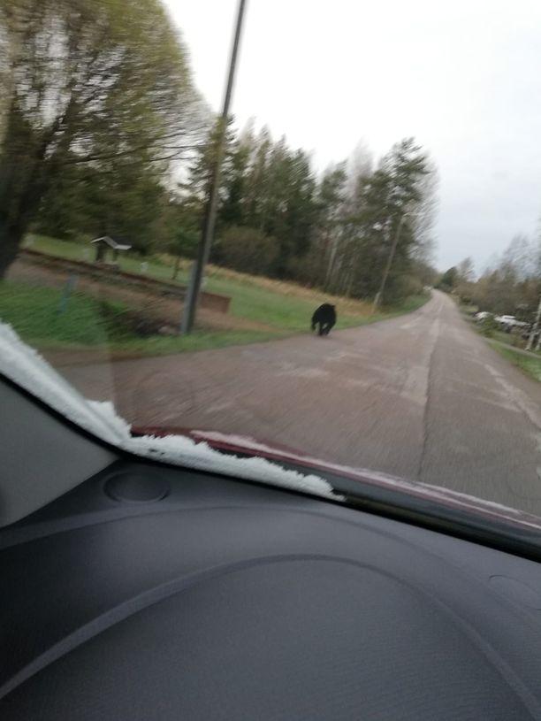 Lukija nappasi kuvan karhusta autostaan.