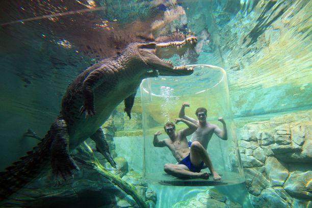 Australian Darwinissa voi tehdä näin läheistä tuttavuutta krokotiilien kanssa.