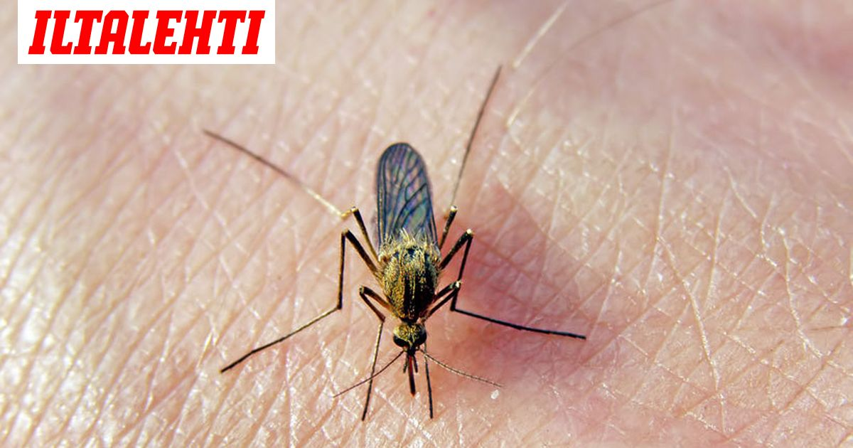 Malariarokote