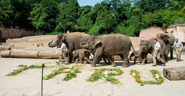 Taru-elefantti toisena vasemmalta.