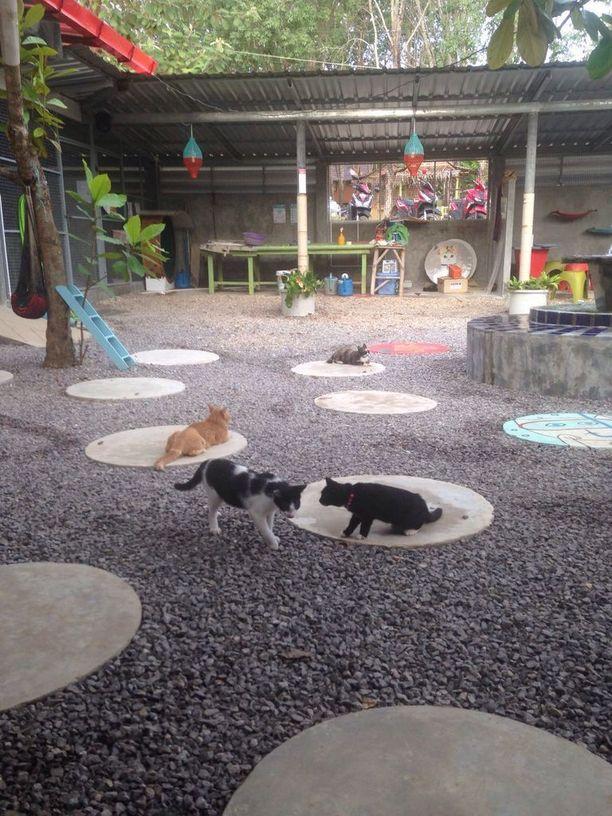 Kissojen rento iltapäivä. Kissakylän ansiosta kissimirrit saavat kuljeksia vapaina, eikä niitä suljeta häkkeihin.