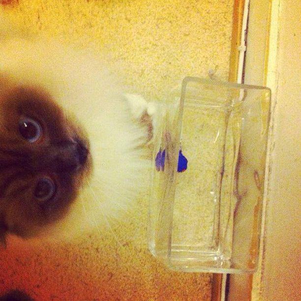 Raimo kiikutti omistajan tikkarin kuppiinsa ja näyttää kuvassa yllättävän lempeältä.