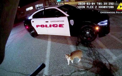 Poliisi pattitilanteessa kiukkuisen kissan kanssa USA:ssa