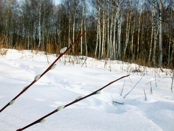 Aurinko lämmittää sen verran, että muutamana päivänä lämpötila kohoaa nollan yläpuolelle Etelä- ja Länsi-Suomessa.