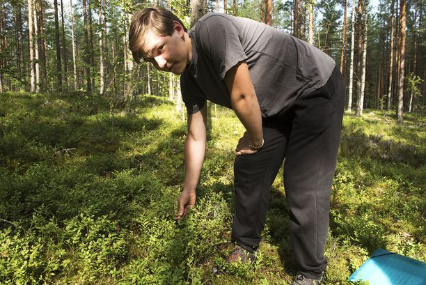 Niko Sandberg arvioi, että mustikoita on tänä kesänä hieman tavanomaista vähemmän hänen kotinurkillaan Hausjärvellä.