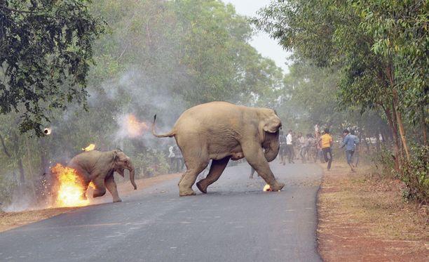 Kyläläiset ovat vihaisia norsuille, koska ne tuhoavat viljelmiä. Toisaalta ihmiset ovat tuhonneet niiden luontaiset asuinalueet.