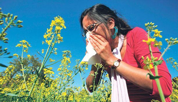 Kutinaa, vesinuhaa, aivastelua, tukalaa oloa? Siitepölyallergiaan voi kuulua useita oireita.