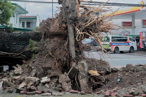 Puu kaatui Manilassa perjantaina.