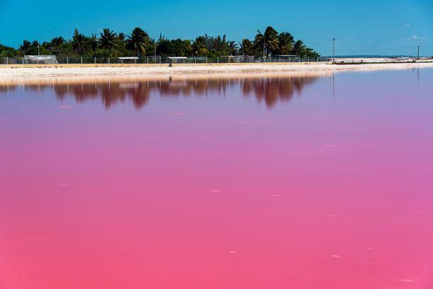 Las Coloradasin vaaleanpunaisessa vedessä uiminen on kielletty.