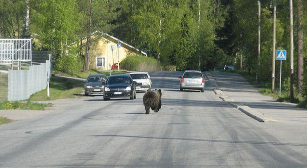 Kadulla autojen seassa juoksennellut karhu säikytteli Vaasassa.