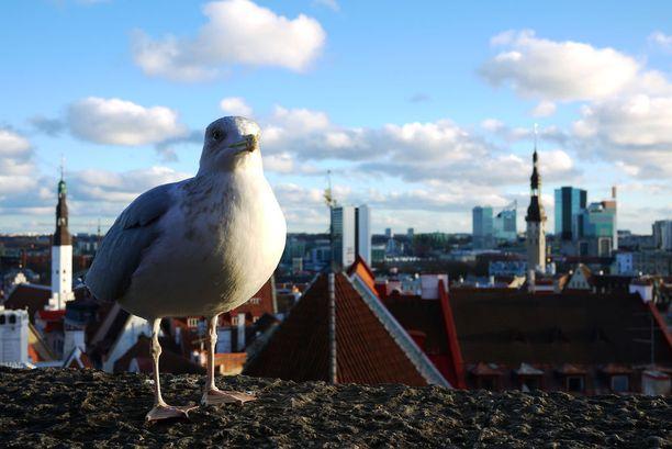 Tallinnaan pääsee laivalla jopa parissa tunnissa.