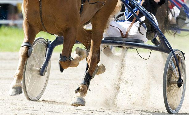 Myyjä ei ollut kertonut, että naapurissa olevat hevoset saivat talon tärisemään ja huojumaan.