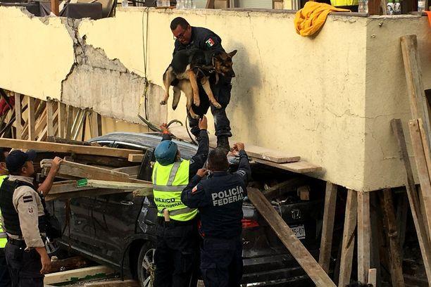 Romahtaneessa Enrique Rebsamenin koulussa kuoli yli 20 lasta. Eloonjääneitä etsittiin koirien avulla.