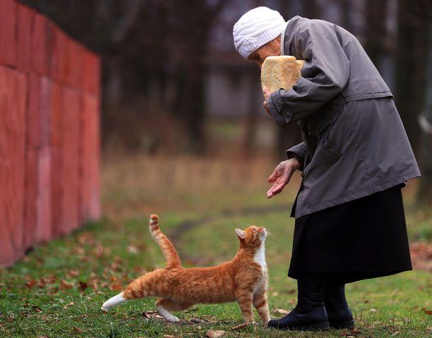 Vanha nainen ja kissa Reshman kylässä Venäjällä. Kuvituskuva.