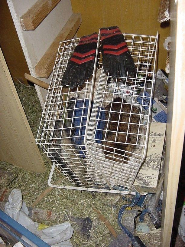 Hamstraajan kotona lattia on usein roskien ja jätteiden peitossa.