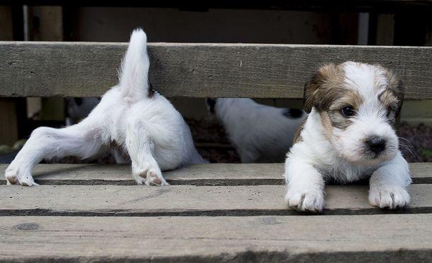 Koirat eivät itse pysty keräämään jätöksiään, joten ihmisen on se tehtävä. Kuvituskuva.