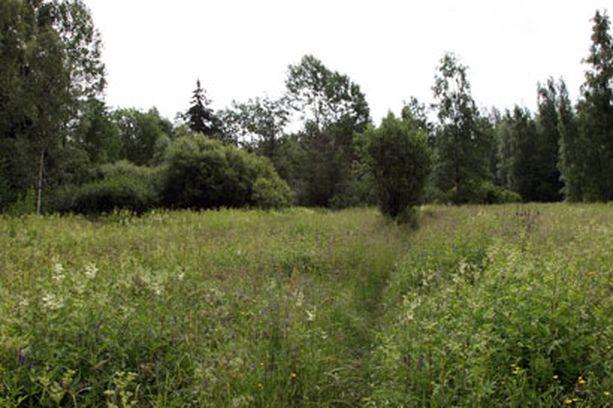 Rönnängenin perinneniitty Keskupuiston luonnonsuojelualueella.