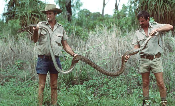 Tässä on pyydystetty pyton. Australia on tunnettu kaikesta vaarallisesta.