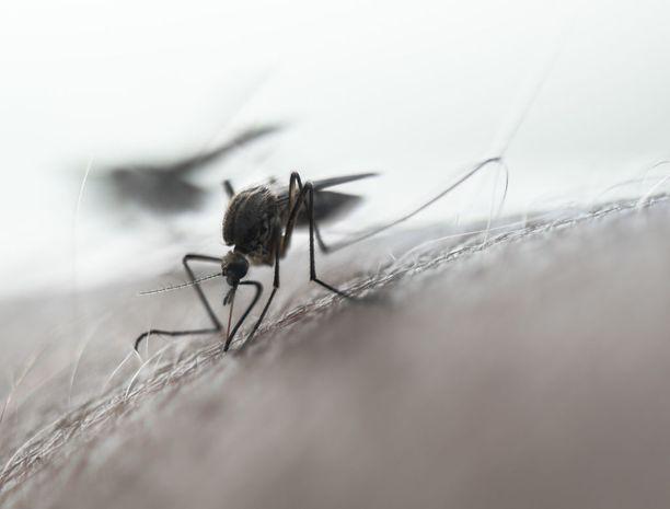 Esimerkiksi voimakas hikoilu sekä tuuli voivat lyhentää hyttyskarkotteen tehoa.