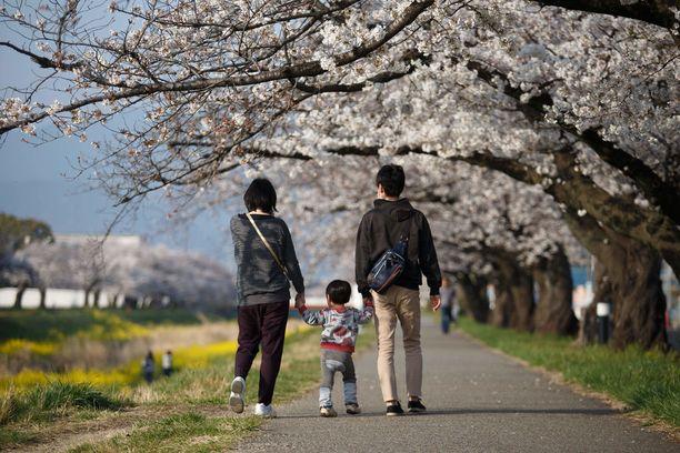Japanilaisperhe kävelyllä kirsikkapuiden katveessa. Kukinta alkoi tänä vuonna lämpimän sään vuoksi varhain.