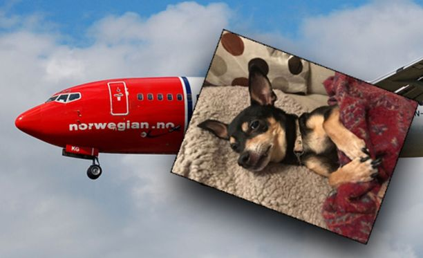 Lola päätyi lennolta putkaan.