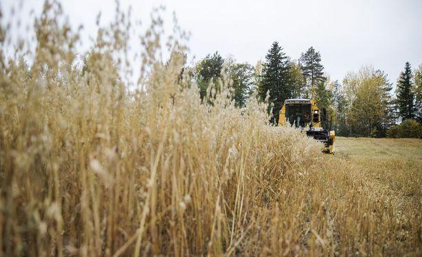 Keskustan kansanedustajat kritisoivat Kilpailuviraston kotimaiseen ruuantuotantoon liittyvää lausuntoa. Kuvituskuva viime vuoden syyskuulta.
