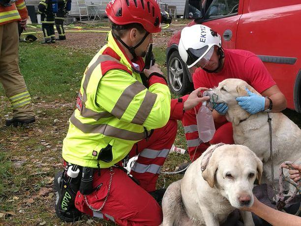 Palomiehet pelastivat kaksi koiraa palavasta talosta. Koirat elvytettiin lisähapen avulla.