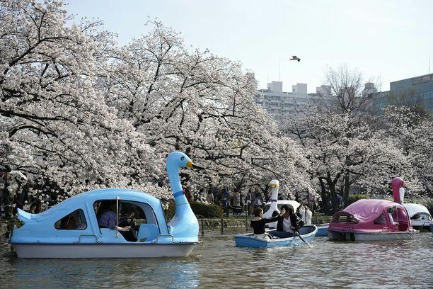 Tokion Ueno-puiston lammella on vilskettä kukinnan aikaan.