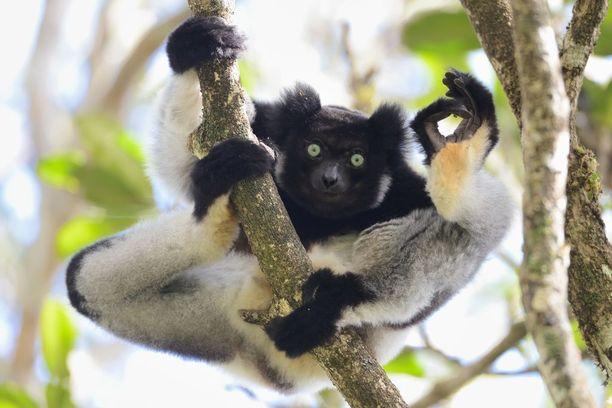 Yamamoto Tsuneon kuva on otettu Madagascarilla.