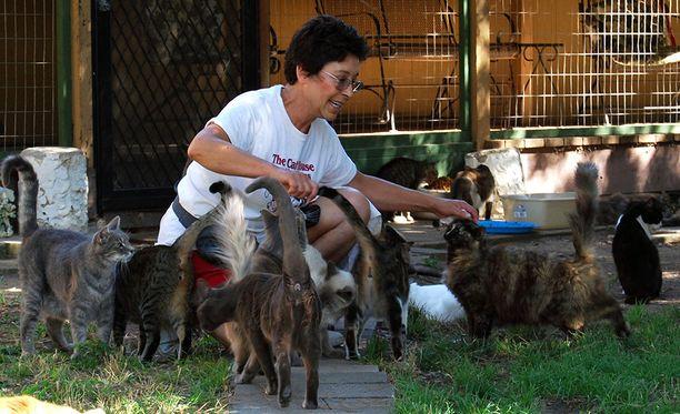 Lynea Lattanzion talon suojissa on ollut yhteensä 28 000 kissaa.