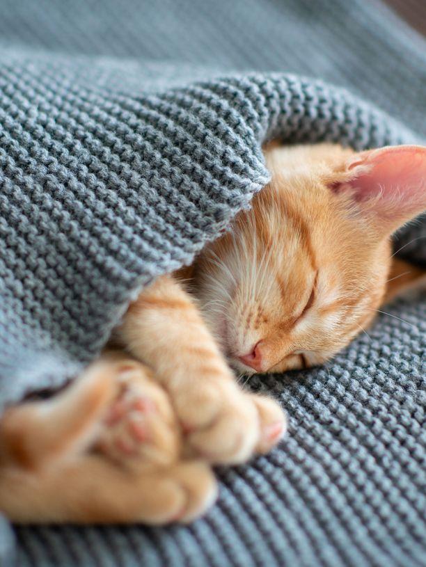 Suloiset unet ovat suuri onni.