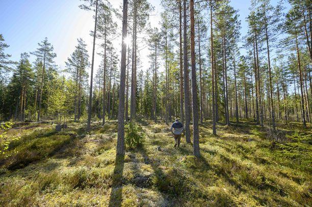 Mäntymetsää Varsinais-Suomen Yläneellä.