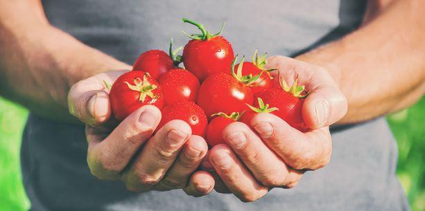 Tutkimuksen mukaan tomaattien syömisestä saattaa olla apua erityisesti miehille.
