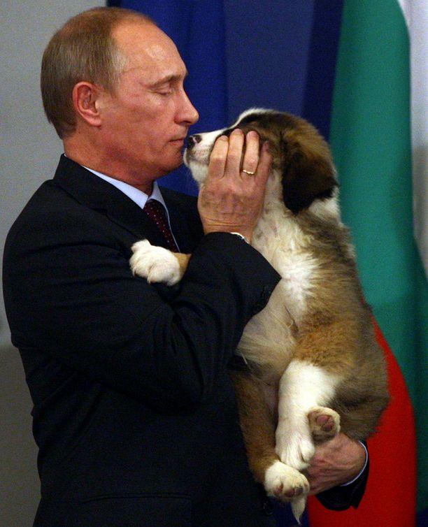 Putin uusi lemmikki on rodultaan bulgarian vuoristopaimenkoira.