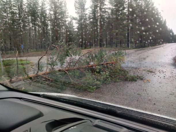 Useita puita kaatui kovien myrskytuulien takia teille.