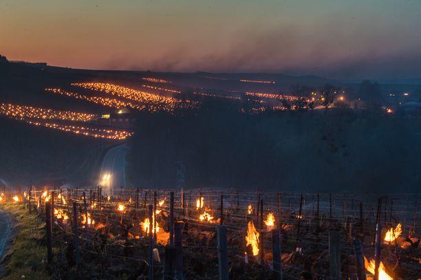 Pakkaselta viinikasveja suojaavat tulet paloivat Burgundin Chablis'ssa keskiviikon vastaisena yönä.