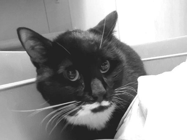 Surusilmäinen Veikka-kissa pääsi viimeisinä elinpäivinään ihmisen hellään hoivaan. Kaikilla hylätyillä kissoilla ei käy yhtä hyvä tuuri.