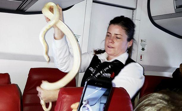 Lentoemäntä sai käärmeen pyydystettyä paljailla käsillä.